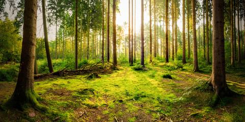 Lichtung im Wald bei Sonnenaufgang