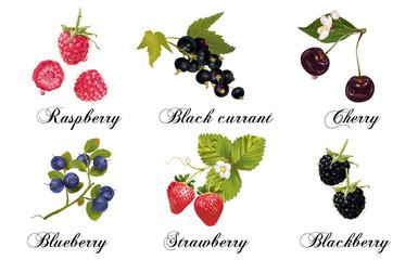 Relistic berries set