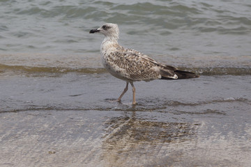 Seagull on the cost