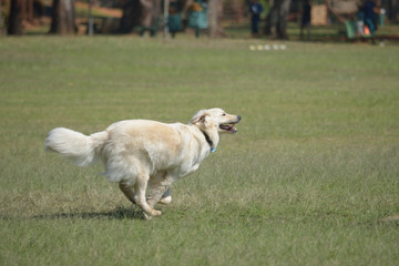 Dog running freely in the park