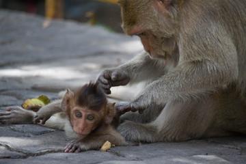 サルの親子の愛
