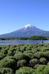 富士山 (河口湖)