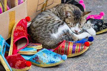 Kitten sleeping on Turkish slippers at Grand Bazaar