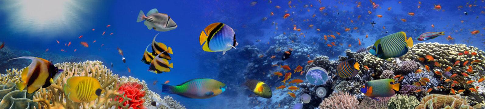 Sea corals. Panorama