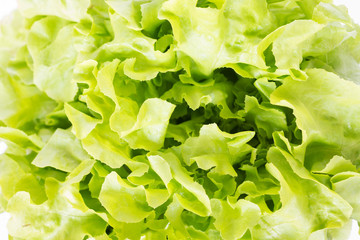 Fresh green lettuce for background; selective focus
