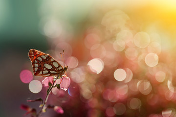 The colorful world of butterflies