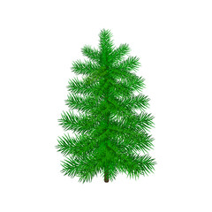 Green realistic pine, Christmas tree