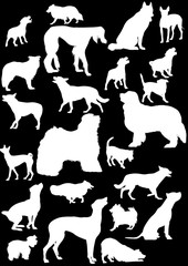 twenty three white isolated on black dogs