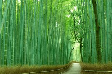 Photo sur Plexiglas Kyoto 京都の竹林