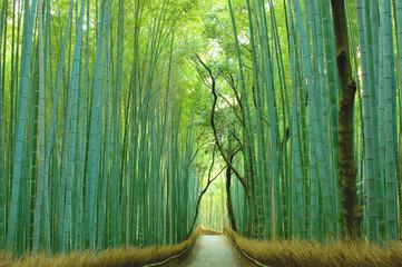 Poster Kyoto 京都の竹林