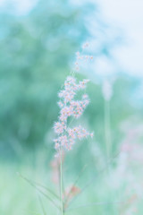 Flower grass in outdoor, vintage background