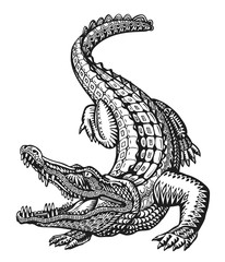Crocodile. Hand drawn ethnic patterns. Alligator, animal sketch. Vector illustration