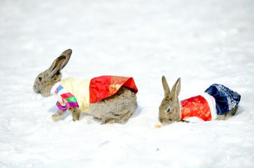 한복입은 토끼들의 산책