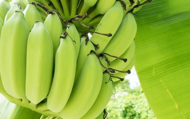 Banana and banana leaf in the farm