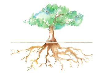 公園の大木、根