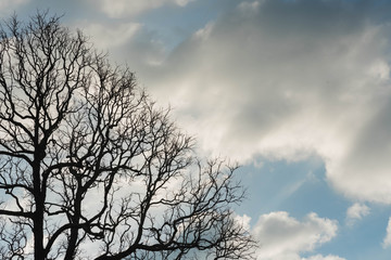 Dead tree with branches and no leaves and sky