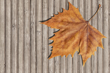Dray Maple Leaf On Bamboo Place Mat Background