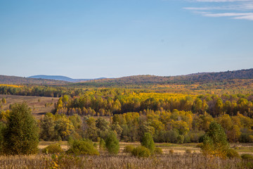 autumn landscape. Beautiful forest
