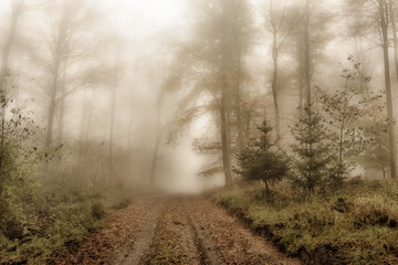 Forest Road In The November Fog