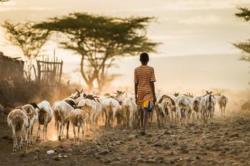 African Livestock Wall mural