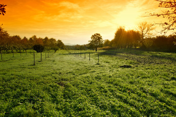 Sunset over green field landscape