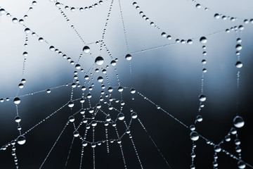 Spider web with dew drops closeup