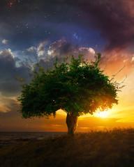 Fototapete - Single tree at sunset
