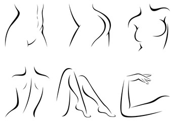 Set stylized female body parts vector illustration of a linear