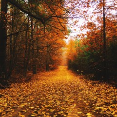 Dirt Road Along Trees During Autumn