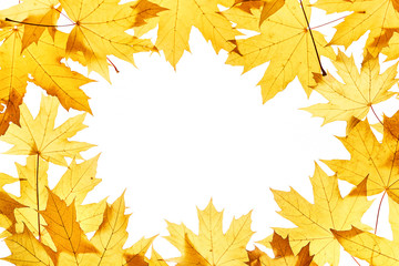 Maple leaves frame on white
