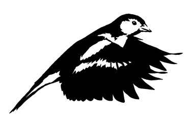 black and white linear paint draw tit bird illustration