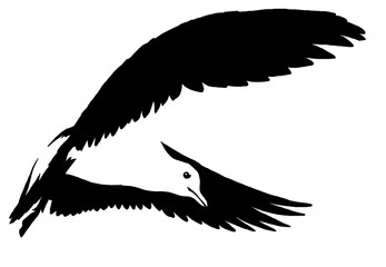 black and white linear paint draw Seagull illustration