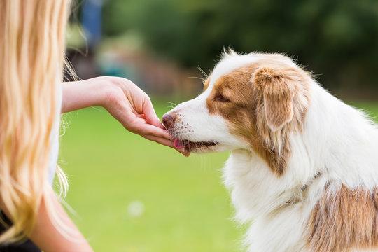 girl gives a dog a treat