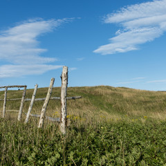 Fence on a grassy landscape, Newfoundland, Canada
