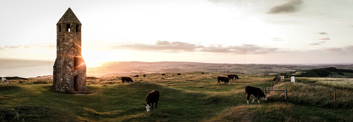 A panoramic view of cattle  grazing at Sundown on the Isle of Wight, England