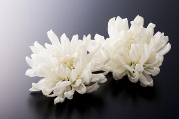 Fotobehang Bloemen 菊