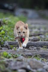 lovely kitty