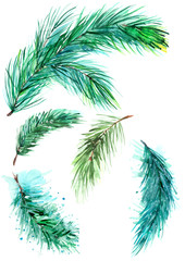 Set of watercolor isolated branches on a white background. Pine, spruce, fir, cedar, juniper, blue spruce. To design