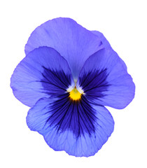 Poster Pansies pansy flower