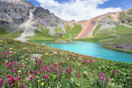Island Lake and wildflower in San Juan Mountains near Silverton, Colorado