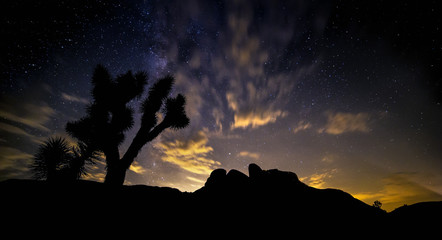 Silhouette of a tree in a desert after sunset