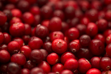 Cranberry, wild berry, background and texture