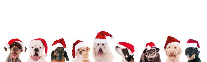 Reihe Hundeköpfe mit Nikolausmützen– Weihnachten