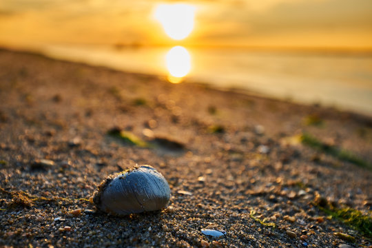 Snail at the beach in the USA during the sunset in the summer