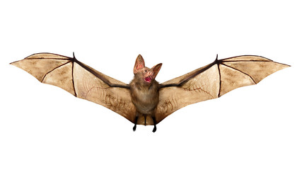 Flying Vampire bat isolated on white background