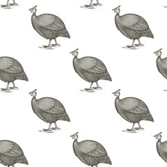 Guinea fowl birds. Seamless vector pattern. Black and white illustration.