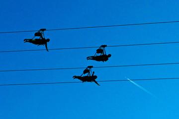 Silhouette von drei Personen an einer Zipline gegen blauen Himmel