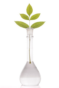 Green leaves in flask with a liquid on white background