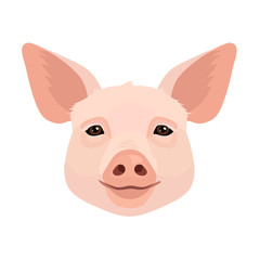 Vector young pig face icon