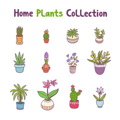 Collection of 12 home plants